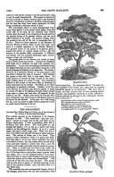Σελίδα 333